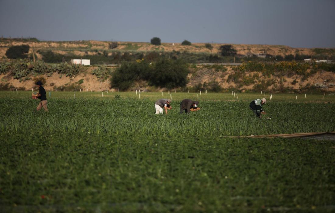 اراضي غزة