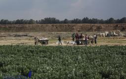 زراعة غزة تدعو المزارعين والصيادين المتضررين من العدوان الإبلاغ عن الخسائر