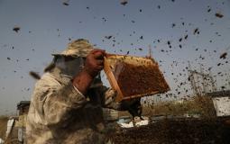 قطف العسل