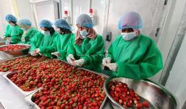 في اليوم العالمي للمرأة سيدات غزة يتحدين الواقع الصعب بالعمل