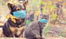فايروس كورونا والحيوانات