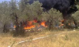 حريق اشجار زيتون