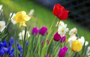 الربيع -طقس